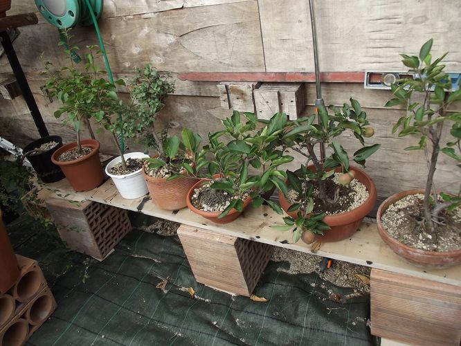 le mie piante (quasi) a posto! Dscf7026