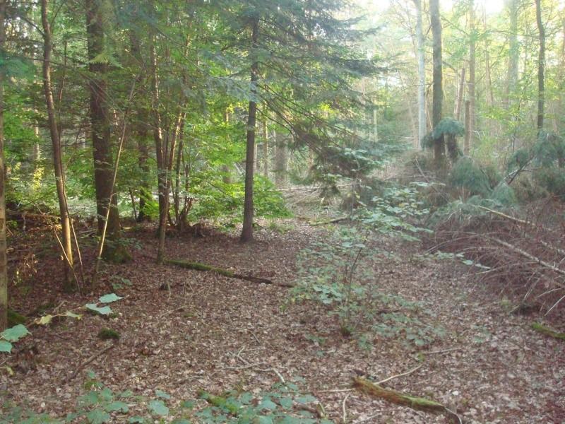 sortie en forêt humide Dsc01510