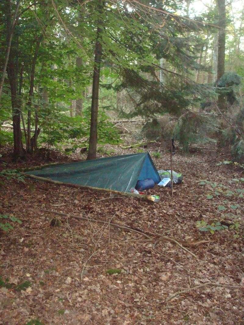 sortie en forêt humide Dsc01511