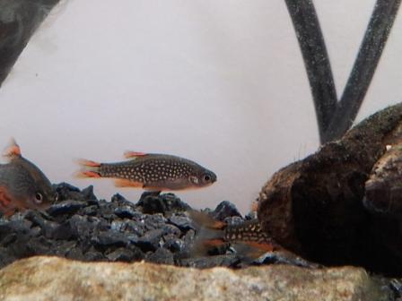mon aquarium  180l 50331010