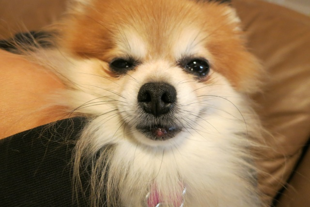 What is this on Peanut's lower lip? Img_1511