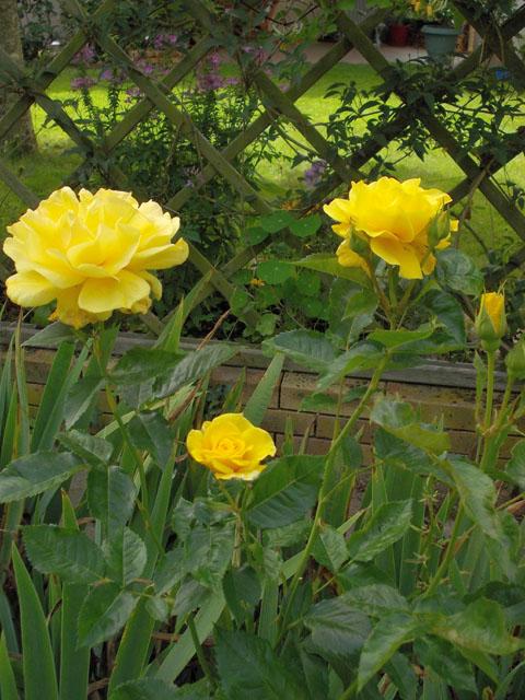 liste res rosiers de Lisaimie Dscn0410