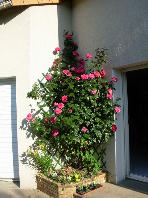 liste res rosiers de Lisaimie Dscn0810