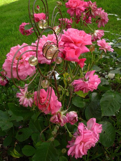 liste res rosiers de Lisaimie Dscn1910