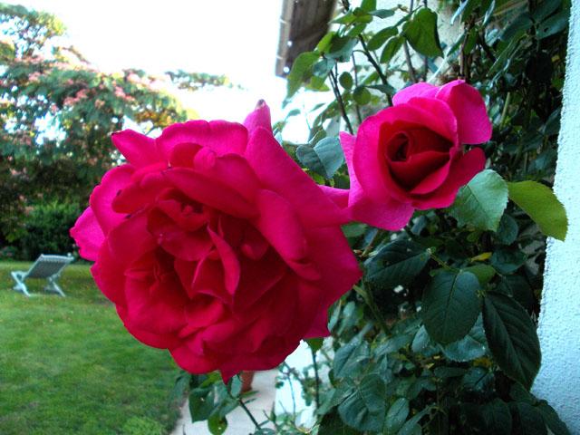 liste res rosiers de Lisaimie Dscn2412