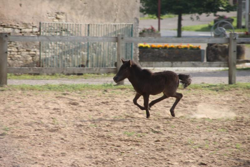 débuter un cheval au concours de CSO  Img_3610