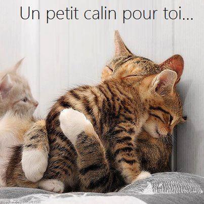 les chats!! 42472210