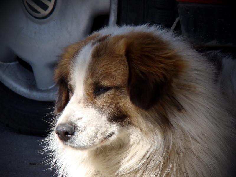 tamara - TOTO, X-Mâle - Né en 2010 - Taille petite à moyenne (Tamara) - Rifil Toto310