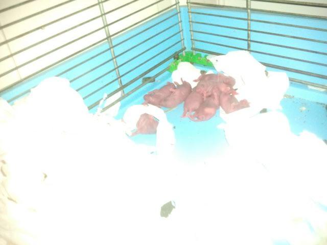 Chaku x Trudy : les 8 (mini) merveilles du monde Ratont11