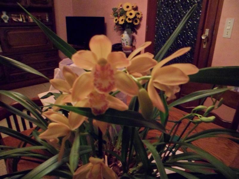 Quelques petites photos de mon cymbidium.(orchidées) Sam_0116