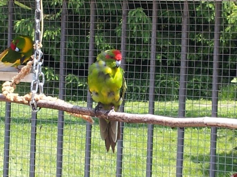 le plumage 20130610