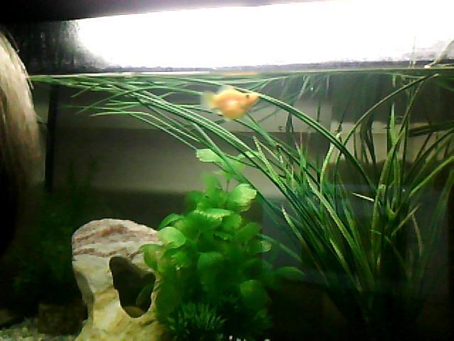 j'ai des bébé poissons (néons) comment faire aidez moi :( Img00310