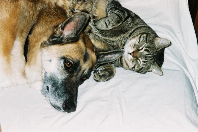 Présentation de mes deux chats et aussi de ma chienne F1000011