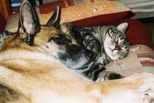 Présentation de mes deux chats et aussi de ma chienne F1000012