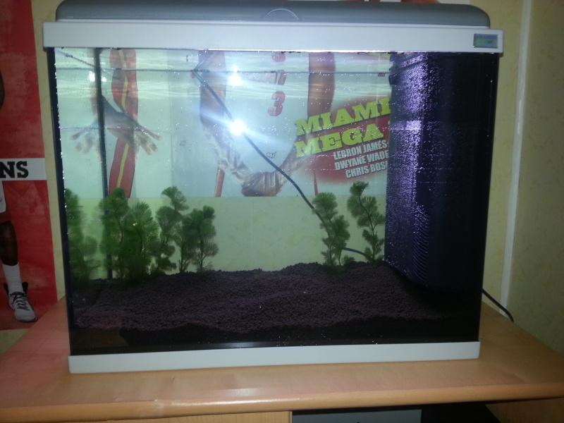 Aquariums 84 Litres +30 Litres Crevettes Taiwan bee f1 Mixt 20121012