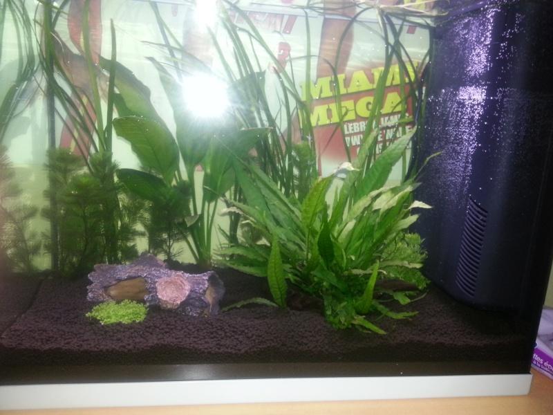 Aquariums 84 Litres +30 Litres Crevettes Taiwan bee f1 Mixt 20121013