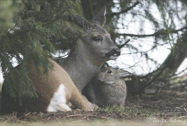 biches et cerfs!! Bambi_10