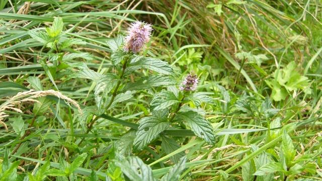 fleurs dernier jour de septembre P1060012