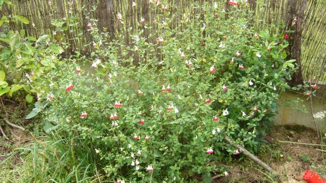 fleurs dernier jour de septembre P1060014