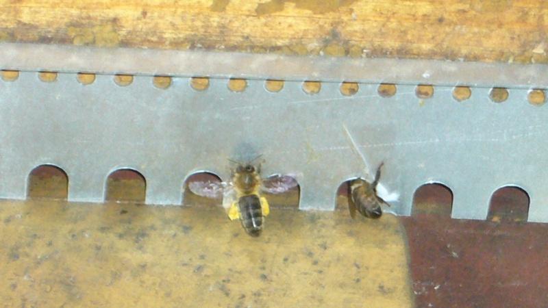 pollen: ca rentre encore! P1060110