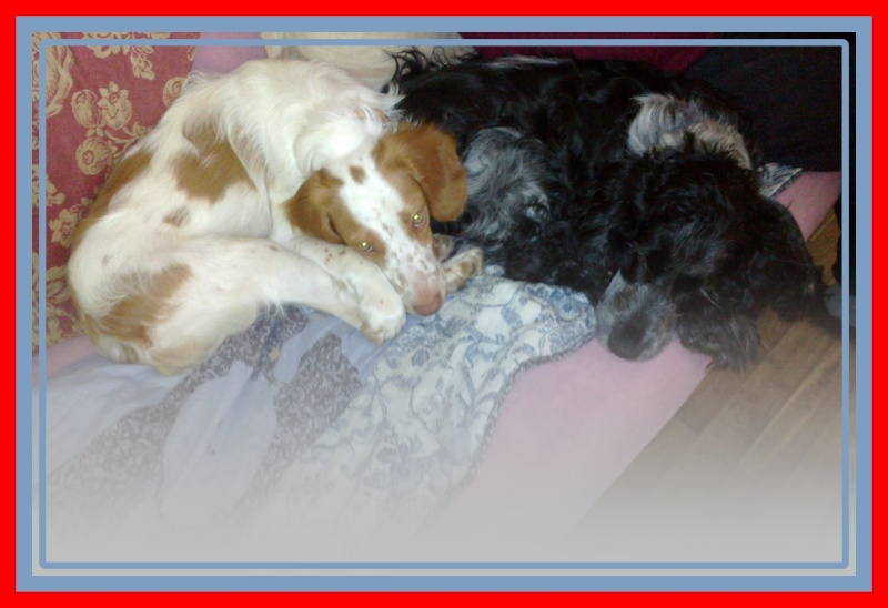 Kookie dans sa famille . 30062011