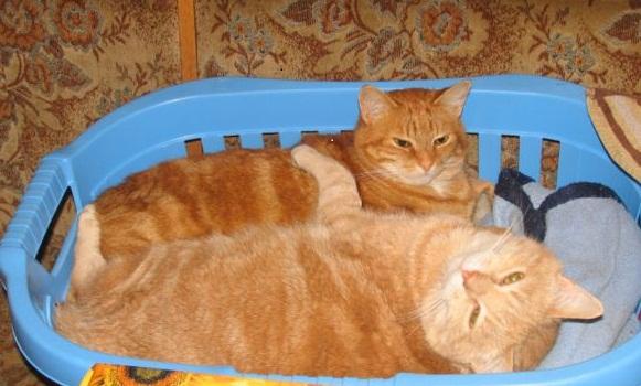 L'art de faire la sieste (par nos amis les chats)  Img_8210
