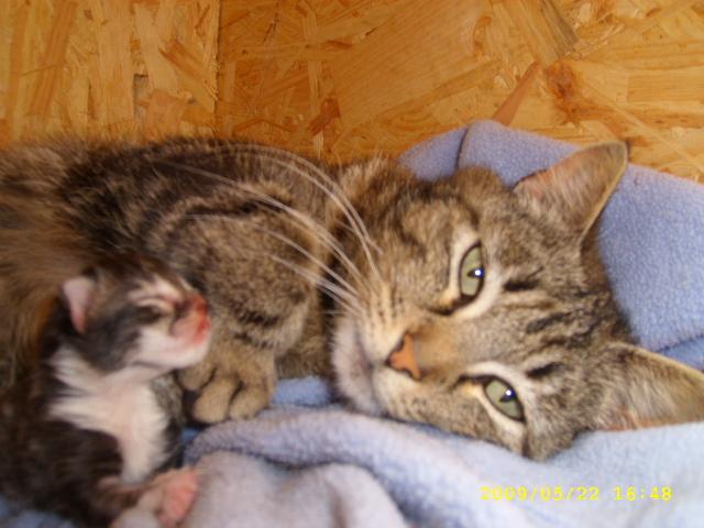 Mon p'tit chaton d'amour <3. 00110