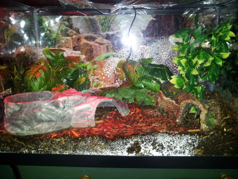 [Sharing] Show Off Your Enclosures - Page 14 2012-117