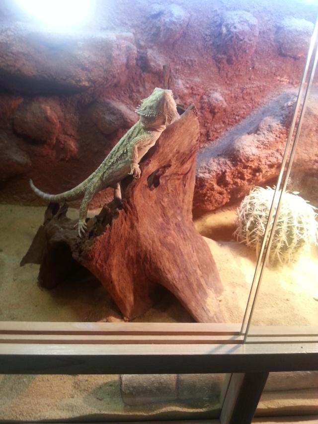 mon premier terrarium 20121010