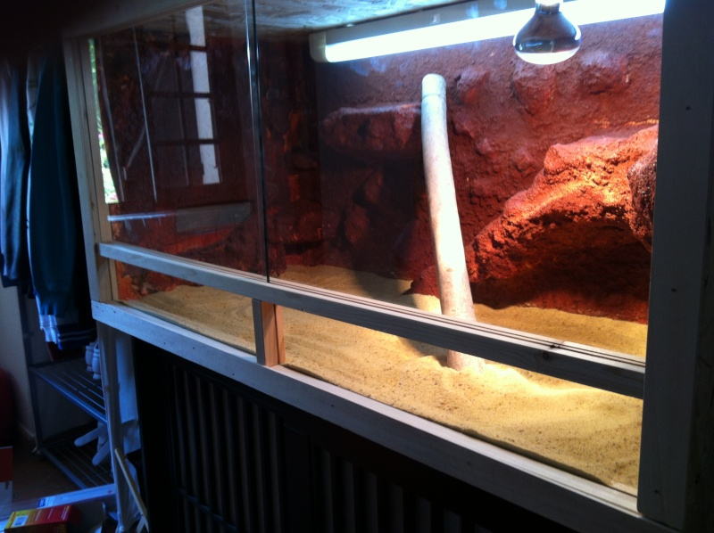 mon premier terrarium Img_2012