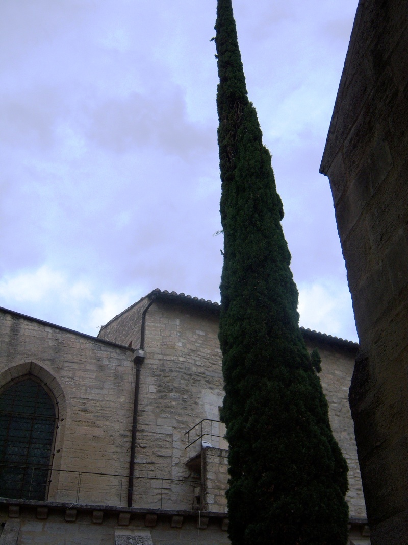 La Chartreuse du Val de Bénédiction 100_2625
