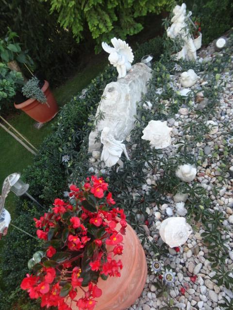 """Passiflora - Passionsblume - kleine """"Juwelen"""" - alles über Aussaat, Pflege, Vermehrung und natürlich Blütenbilder :) - Seite 3 04410"""