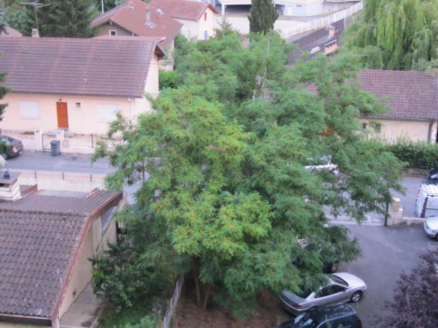 décors naturel(arbres) Mes_im26