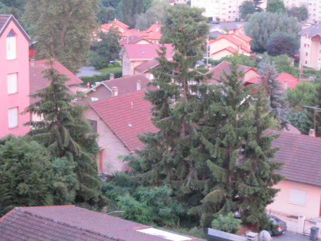 décors naturel(arbres) Mes_im29