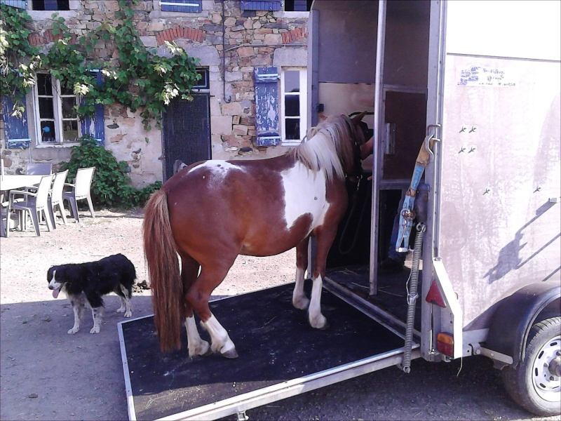 INDIANA - ONC poney typée shetland présumée née en 2000 - adoptée en juillet 2013 - Page 2 Img_2010