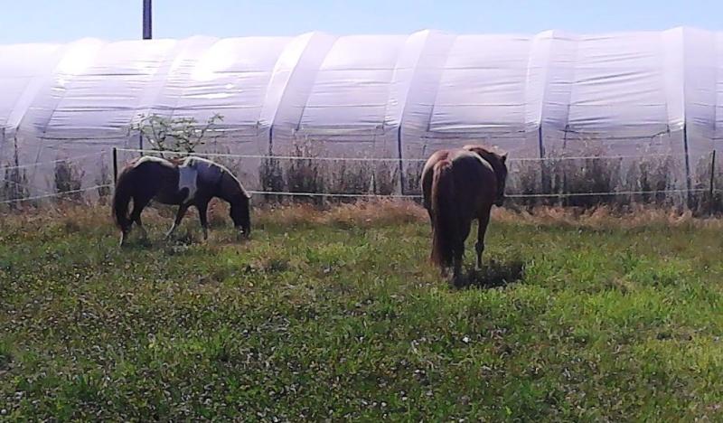 INDIANA - ONC poney typée shetland présumée née en 2000 - adoptée en juillet 2013 - Page 2 Img_2013