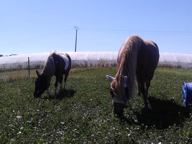 INDIANA - ONC poney typée shetland présumée née en 2000 - adoptée en juillet 2013 - Page 2 Img_2015