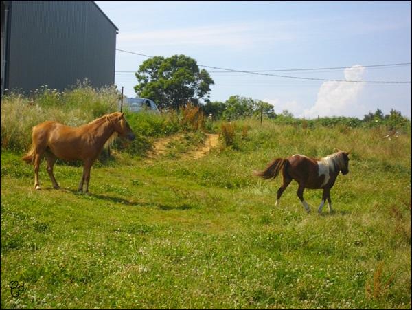 INDIANA - ONC poney typée shetland présumée née en 2000 - adoptée en juillet 2013 - Page 2 Imgp2210