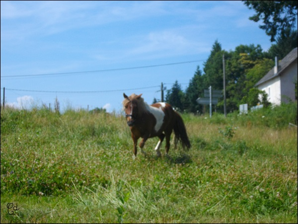 INDIANA - ONC poney typée shetland présumée née en 2000 - adoptée en juillet 2013 - Page 2 Imgp2310