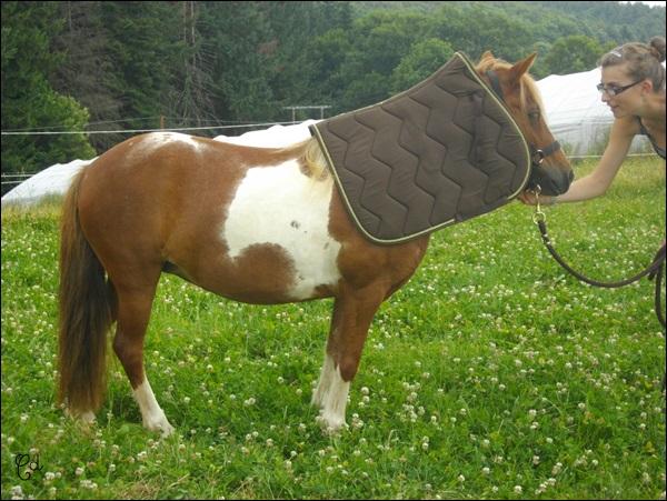 INDIANA - ONC poney typée shetland présumée née en 2000 - adoptée en juillet 2013 - Page 2 Imgp2413