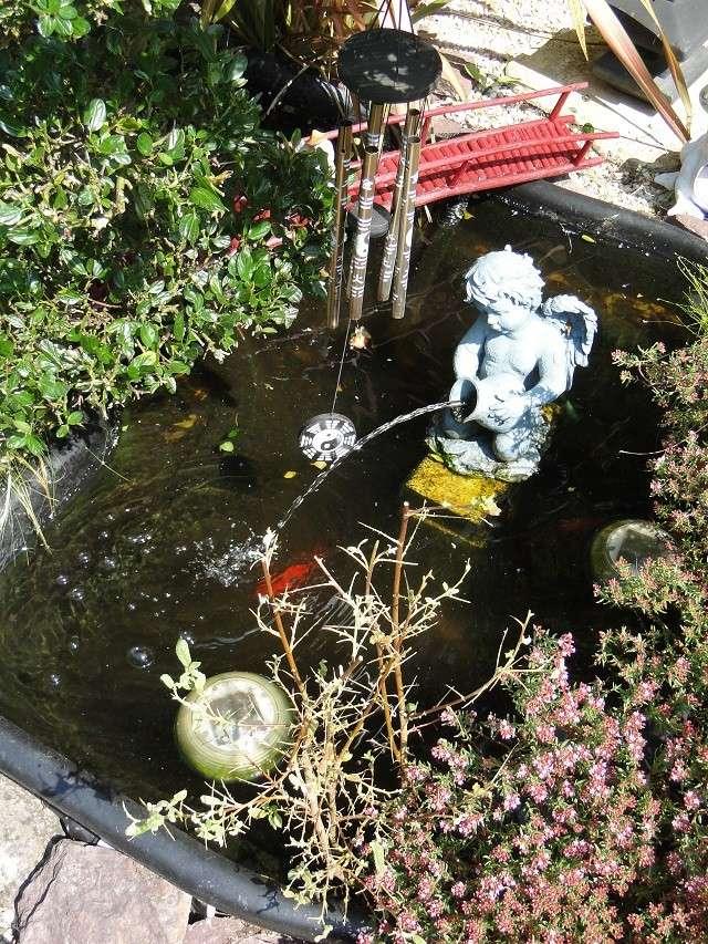 bassins fleuris  et poissons  - Page 4 00512