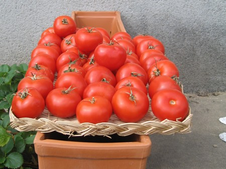 Des tomates ? - Page 2 Tomate11