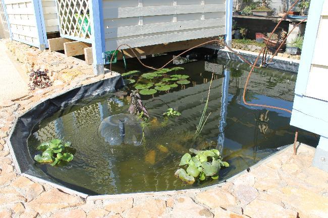 autre bassin jardin 311
