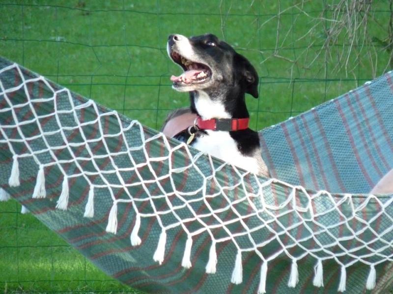 Randonner avec son chien - Page 3 21647_10