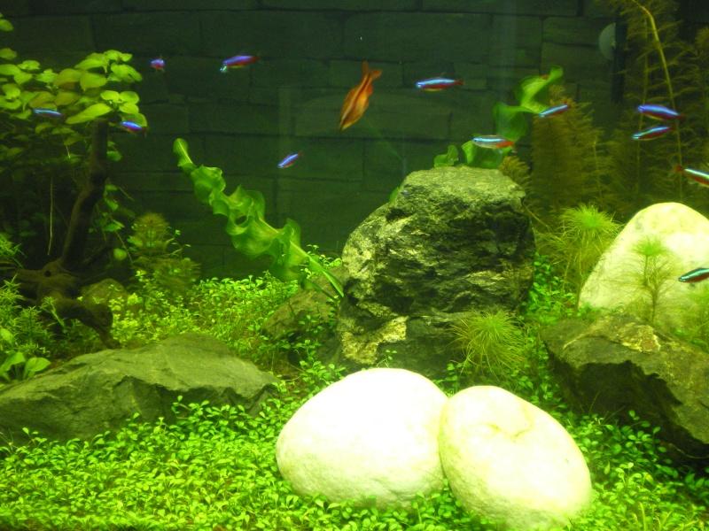 Mis en route de mon aquarium  192_a10