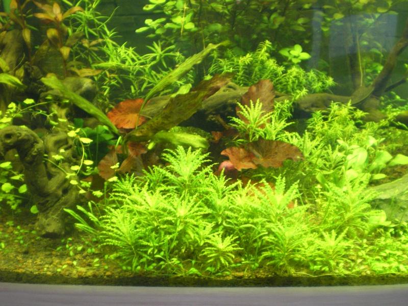 Mis en route de mon aquarium  Imgp0112