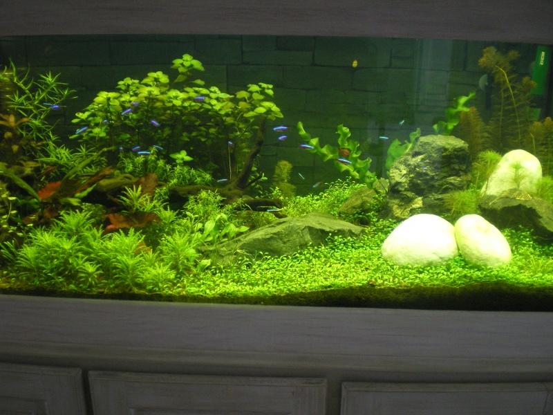 Mis en route de mon aquarium  Imgp0210