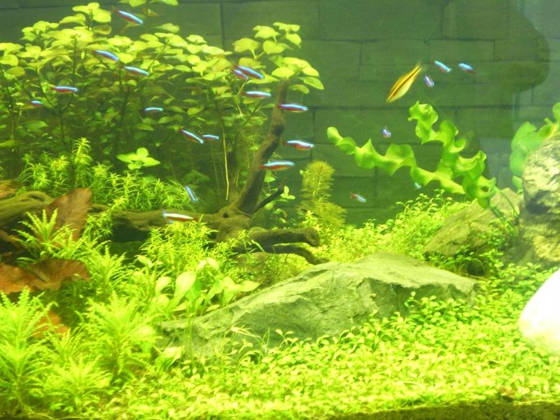 Mis en route de mon aquarium  Imgp0213