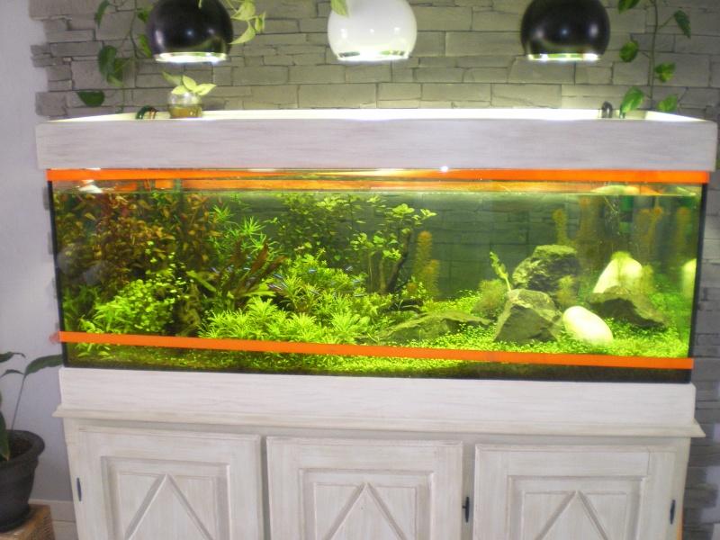 aquarium qui fuit  Imgp0214