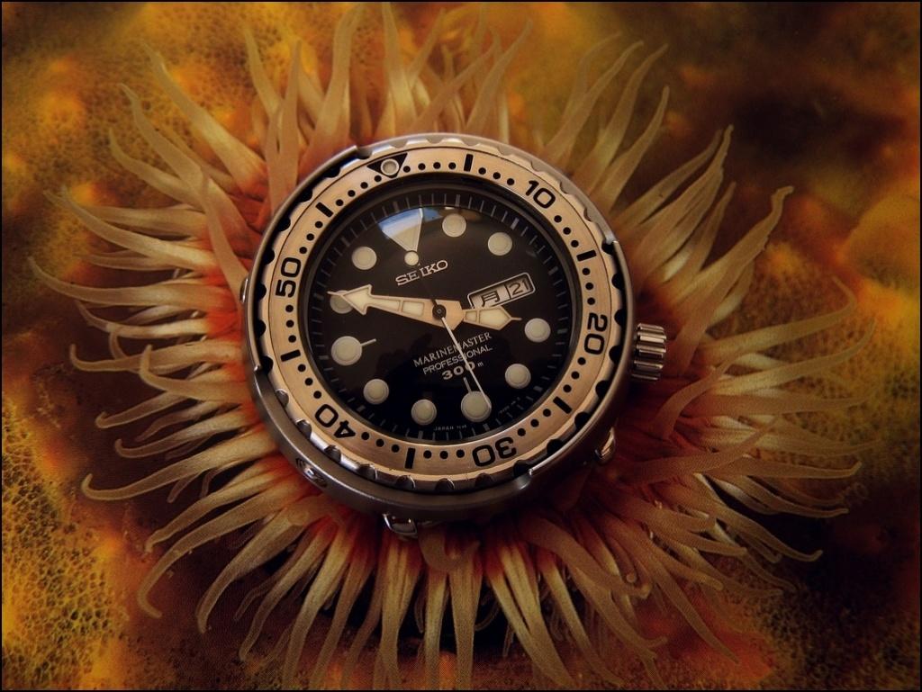 Votre montre du jour - Page 5 Rtimg_11